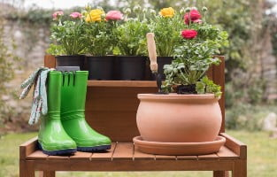 Wellie boots, plants and gloves at the ready.