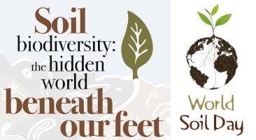 world soil day logo